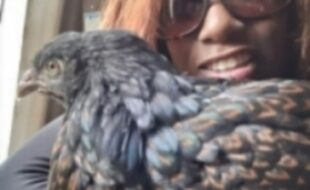 Me with my favorite hen! The sweetest most gentle chicken ever!